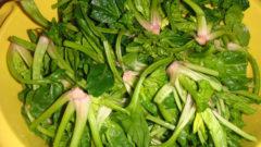 Yeşil Mercimekli Ispanak Kökü Yemeği